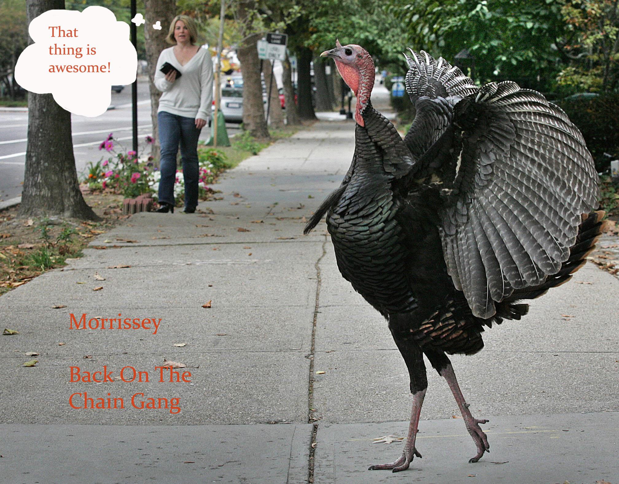 turkey-1 (Morrissey Back On The Chain Gang) copy.jpg