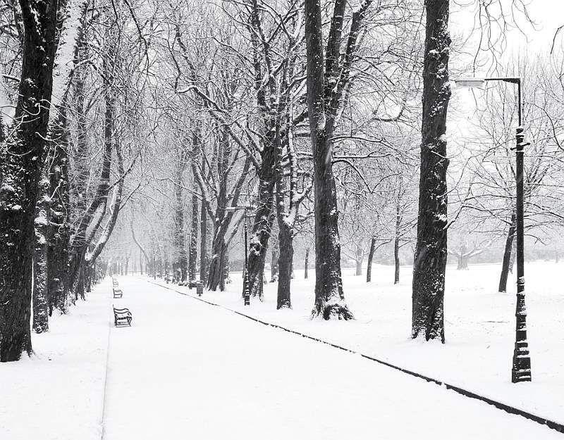 Longford park.jpg