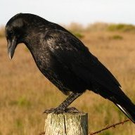 Vegan Crow 666