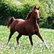 gotconfusedkilledahorse